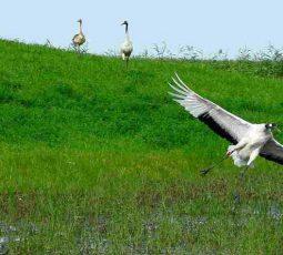 Koshi Tappu Wildlife reserve tour